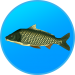 Download Free APK True Fishing. Fishing simulator 1.11.1.544 For Android 2019