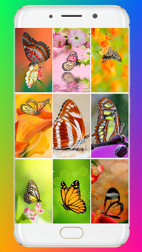Download Butterfly Wallpaper 1.07 APK For Android