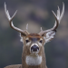 Download Hunting Camera Pro 1.0.3 APK For Android