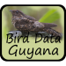 Bird Data - Guyana Bird Data - Guyana 1082 APK For Android