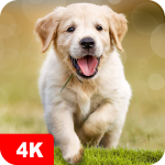 Dog Wallpapaers & Puppy Backgrounds 5.0.6 APK For Android