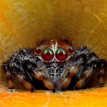 Download Spider Wild Animals Jigsaw Puzzles 1.0 APK For Android